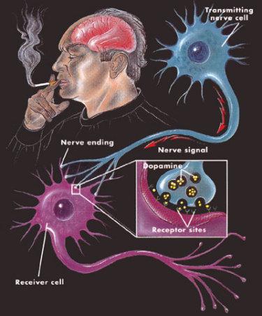 chemical addiction to smoking nicotine