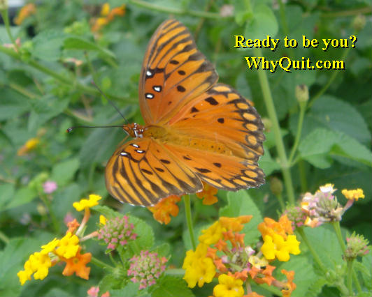 Butterfly - WhyQuit.com - Isn't it time for the real you to emerge, spread your wings and take flight?