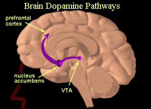 brain dopamine pathways
