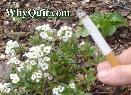 Spring is the perfect time to quit smoking and reclaim your mind and life